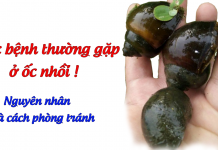 cac-benh-thuong-gap-o-oc-nhoi