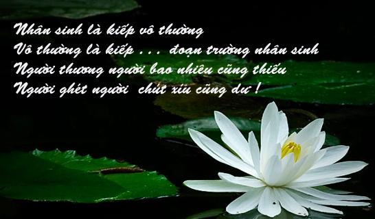 vo-thuong-la-gi
